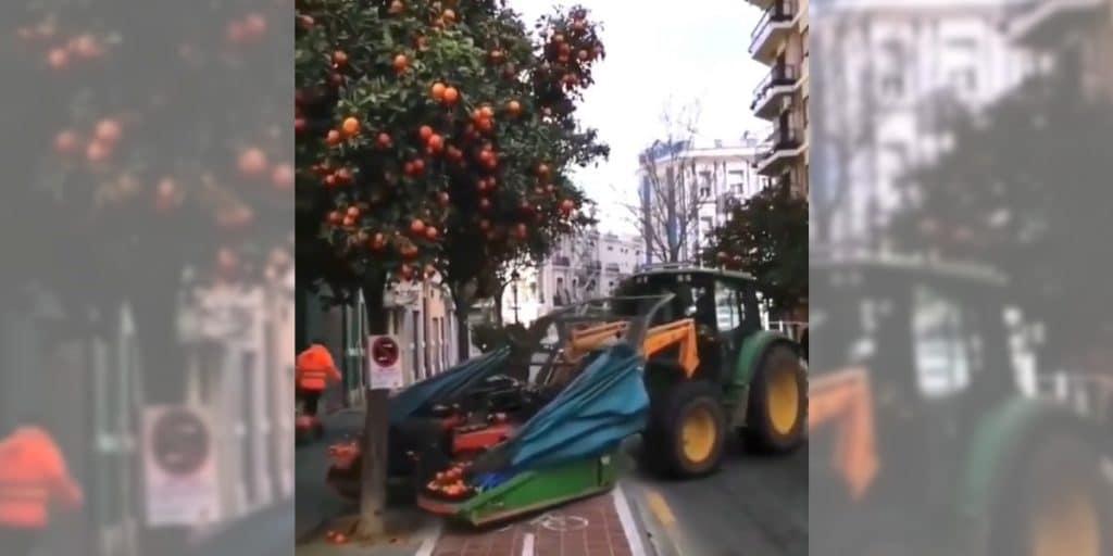 Así es la forma definitiva de recoger las naranjas de las calles