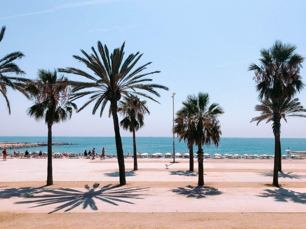 palmeras Barcelona