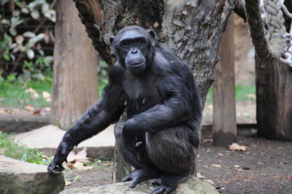 El Zoo de Barcelona reparte helados entre los animales para combatir el calor